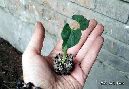 cafe de la poste rooftop garden beixinqiao beijing china (2)