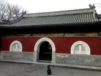 grape wall challenge 2013 temple restaurant beijing venue